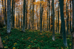 Jesienna sesja ślubna w Bieszczadach | Karolina i Alan 1