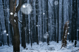 warsztaty fotograficzne w Bieszczadach Las Bieszczadzki zimą fot. Radek Kaźmierczak