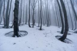 warsztaty fotograficzne w Bieszczadach Buczyna zimową porą, zjawiskowe kręgi w lesie