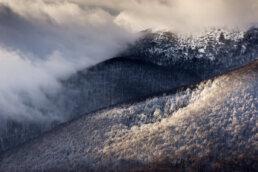 warsztaty fotograficzne w Bieszczadach parujące lasy bukowe zimową porą w Bieszczadach