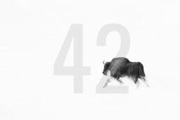 Wall Decor | Bieszczady 42