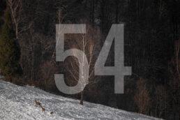 Wall Decor | Bieszczady 54