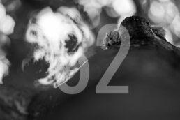 Wall Decor | Bieszczady 62