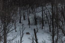 foto czatownia w bieszczadach bezkrwawe łowy